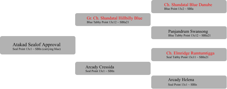 Gr. Ch. Shandatal Hillbilly Blue Blue Tabby Point 13c12 ~ SBIa21  Arcady Cressida  Seal Point 13c1 ~ SBIn Ch. Shandatal Blue Danube Blue Point 13c2 ~ SBIa Panjandrum Swansong Blue Tabby Point 13c12 ~ SBIa21 Ch. Elmridge Rumtumtigga Seal Tabby Point 13c11 ~ SBIn21 	 Arcady Helena Seal Point 13c1 ~ SBIn	 Atakad Sealof Approval Seal Point 13c1 ~ SBIn (carrying blue)